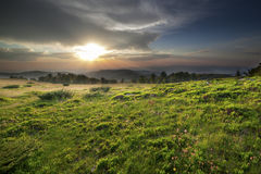 Sunset over green field Stock Image