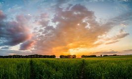 Sunset over green field with road Stock Photography