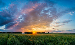 Sunset over green field with road Stock Image
