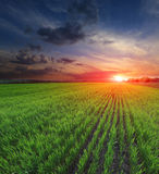 Sunset over green field Royalty Free Stock Photos