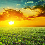 Sunset over green grass field Royalty Free Stock Photo