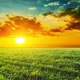 Sunset over green grass field. Orange sunset over green grass field Royalty Free Stock Photo
