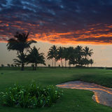 Sunset over a green lawn with palm trees. Goa. Stock Images