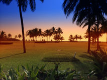 Sunset over a green lawn with palm trees. Goa. Royalty Free Stock Images