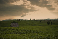 Sunset over green meadow. Sunset over beautiful countryside, mountains in background royalty free stock photography