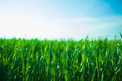 Free Sunset Over Green Meadow Stock Image - 46032961