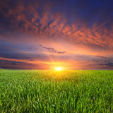 Sunset over green meadow Royalty Free Stock Images