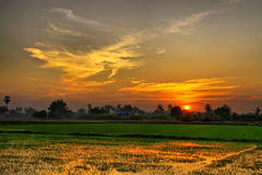 Sunset over green rice farm Stock Images