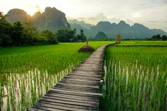 Sunset over green rice fields in Vang Vieng, Laos. Sunset over green rice fields and mountains in Vang Vieng, Laos Stock Images