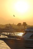 Sunset over harbor in Egypt Royalty Free Stock Image