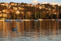 Sunset over Harbour in Sydney Royalty Free Stock Image