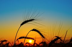 Sunset over harvest Royalty Free Stock Photos