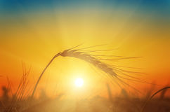 Sunset over harvest Stock Photos
