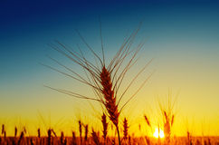 Sunset over harvest Royalty Free Stock Image
