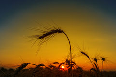 Sunset over harvest field Royalty Free Stock Photography