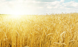 Sunset over harvest field Stock Images