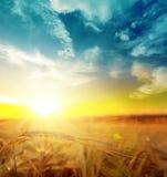 Sunset over harvest field Stock Photos