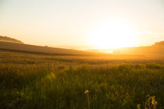 Sunset over a harvested field Royalty Free Stock Image