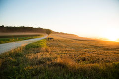Sunset over a harvested field Royalty Free Stock Photo