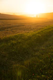 Sunset over a harvested field Royalty Free Stock Photography