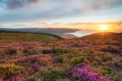 Sunset at Bossington Hill in Somerset. Sunset over heather in bloom on the slopes of Bossington Hill above Minehead in Somerset and looking out to Bossington and stock photography