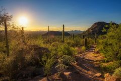 Sunset over hiking trail in Saguaro National Park in Arizona stock images
