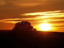 Sunset over hill with canopy of oak tree Stock Photography
