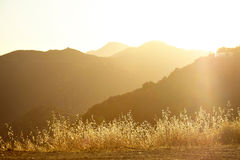 Sunset over the hills in Malibu. High wild grass at the top of the mountain at sunset Stock Image