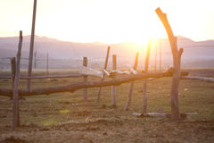 Sunset over horse fence Stock Images