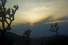 Sunset over Joshua Trees. This is a sunset over Quail Ridge at Joshua Trees National Park in California Royalty Free Stock Image