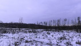 Sunset over Kampinos National Park in winter. Leszno, Poland Royalty Free Stock Photos
