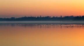 Sunset over the lake Balaton of Hungary with birds Stock Photography