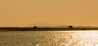 Sunset over Lake Kariba with elephants in the distance Royalty Free Stock Image