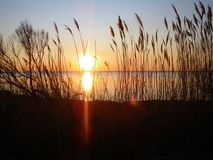 Sunset. Sunset over the lake through the shore grass Royalty Free Stock Image