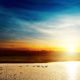 Sunset over lake with swans Stock Photos