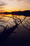 Sunset over Lake with Tree. Sunset reflecting in calm lake with dead tree in foreground Stock Images