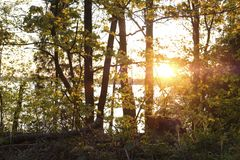 sunset over the lake Valdai stock images