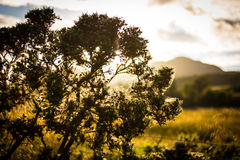 Sunset over landscape, Callander, Scotland, UK. Sun set in Callander in the Trossachs National Park, Scotland over mountains and shrubbery, with mountains in Royalty Free Stock Photography