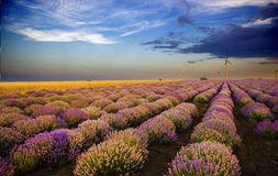 Sunset over lavender field with wind turbine Stock Image