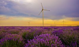 Sunset over lavender field with wind turbine Royalty Free Stock Image