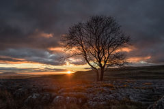 Sunset over Lone Tree, Yorkshire Dales Royalty Free Stock Photos