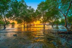 Sunset over mangrove forest during high tide at Klong Mudong Phuket Stock Photo