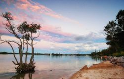Sunset over mangrove tree Stock Images