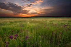 Sunset over Marshland. Fiery Sunset over swampy land Stock Images