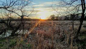 Sunset over Marshy Swamp Shinning on Cattails. A beautiful sunset over a marshy, swamp area in Pell Lake, Wisconsin, shinning onto some cattails with the broken royalty free stock photography