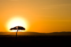 Sunset over Masai Mara Royalty Free Stock Photo