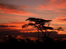 Sunset over the masai Mara Stock Photos