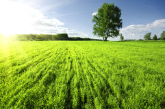 Free Sunset Over Meadow Stock Images - 15529014