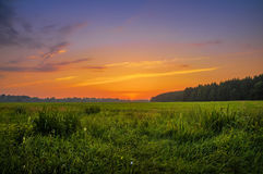 Sunset over meadow Stock Photography