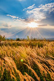 Sunset over a meadow Royalty Free Stock Photo